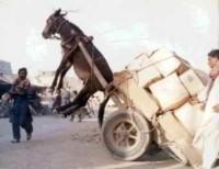 Funny Donkey (7)